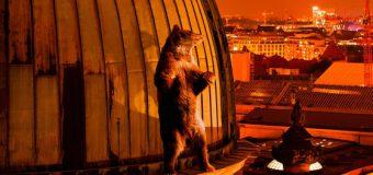 Berlinale 2018 – Tage 6 bis 8: In den Gängen tobt das Leben