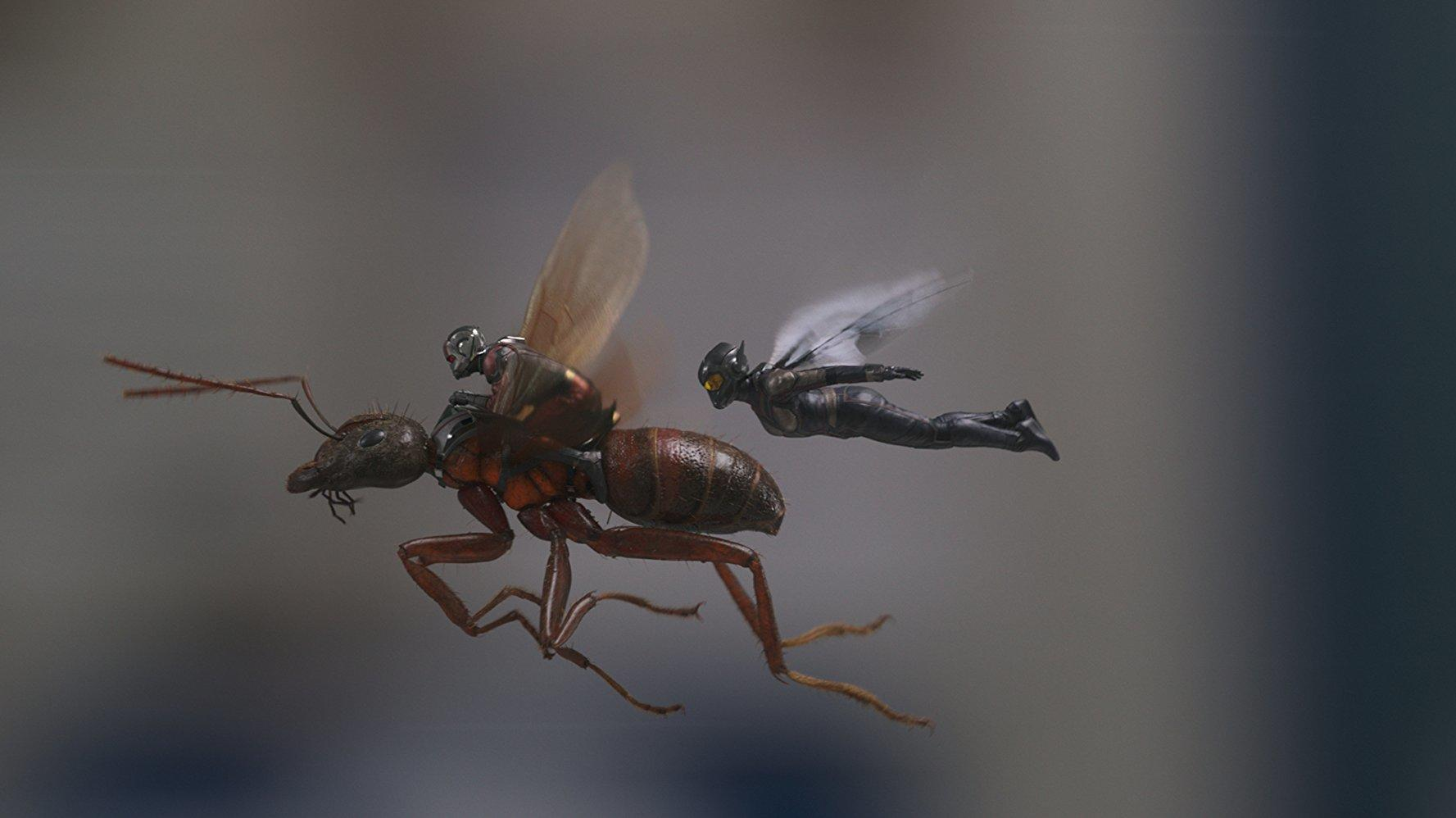 Kritik: Ant-Man and the Wasp (USA 2018)